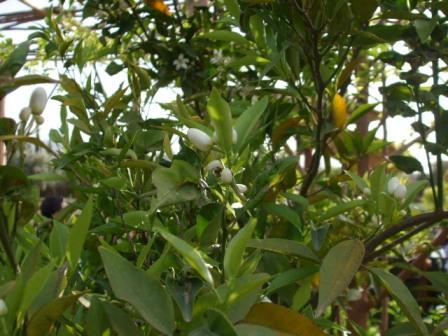 ourika-bio-aromatique6.jpg