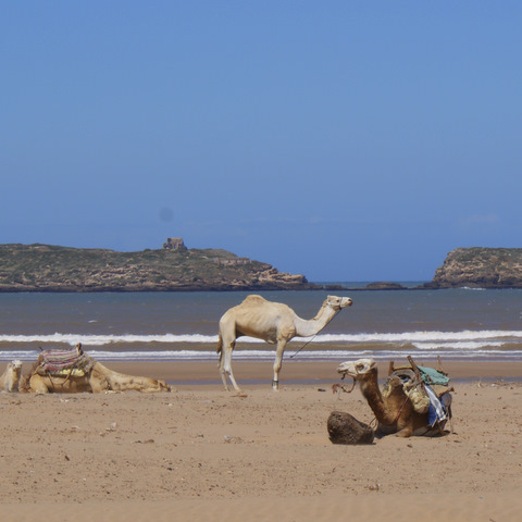 Essaouria Beach Life