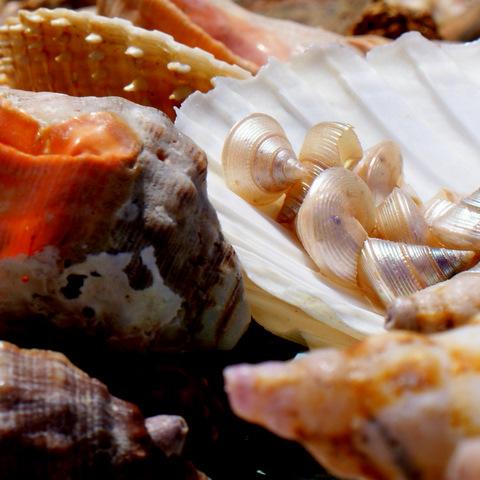 Sea Shells Essaouira Medina